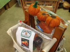 Pumpkin Kits